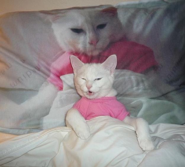 Смешные кошки и коты фото подборка