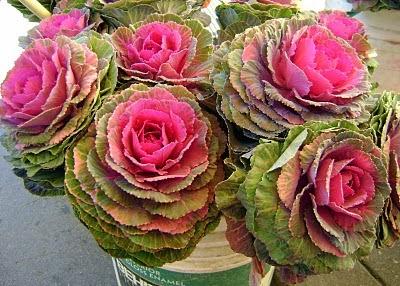 the flower garden rose types and rose varieties. Black Bedroom Furniture Sets. Home Design Ideas
