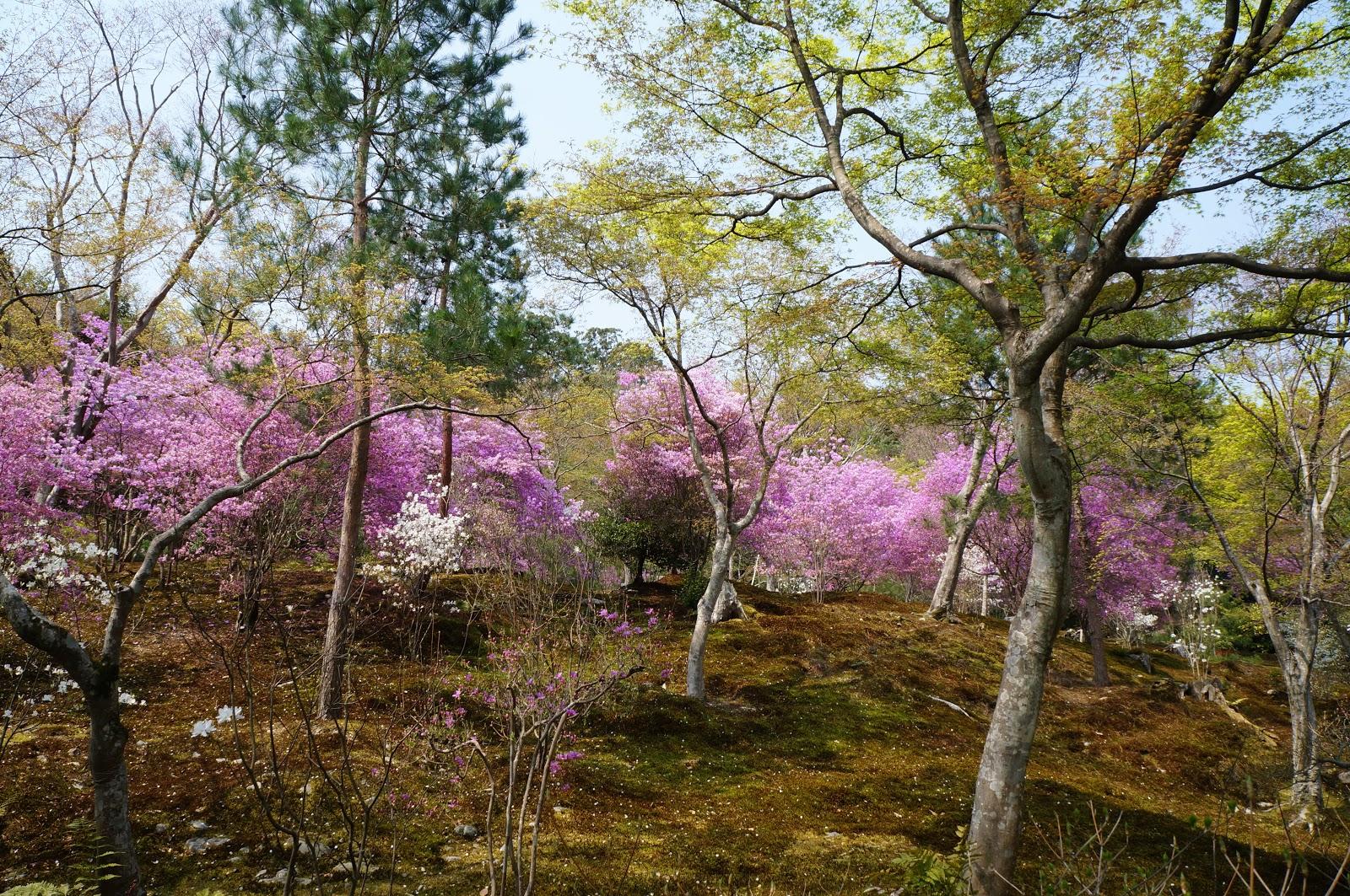 arashiyama, nijo castle and kyoto | travelling allrite