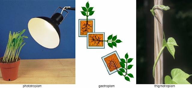 mrs remis 39 science blog 5th grade december 2013. Black Bedroom Furniture Sets. Home Design Ideas