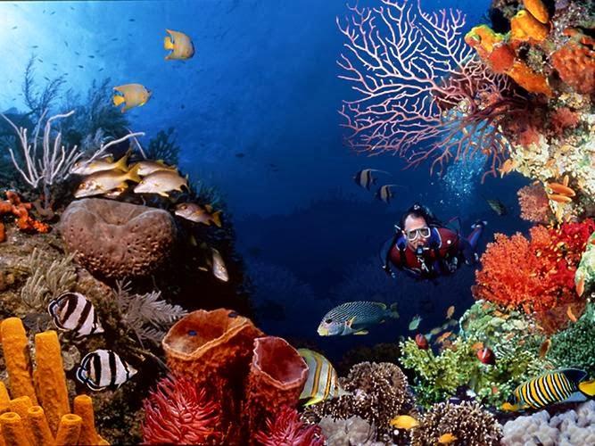 Biota laut di taman bunaken island
