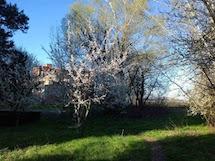 Primavera, poesie di Giovanni Pascoli, Cesare Pavese e Salvatore Quasimodo