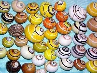 los caracoles terrestres más hermosos del mundo, las polimitas