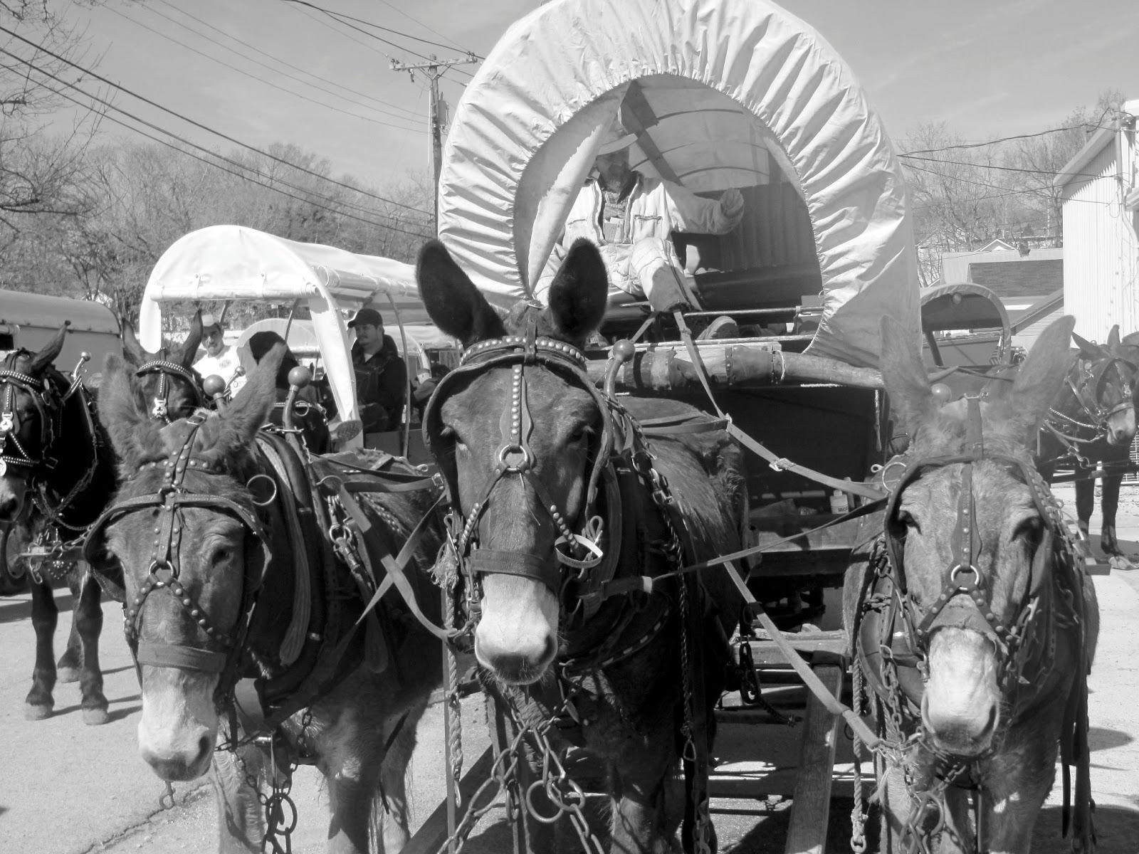 Tennessee haywood county brownsville - Bertie County N C To Haywood County Tenn Migration