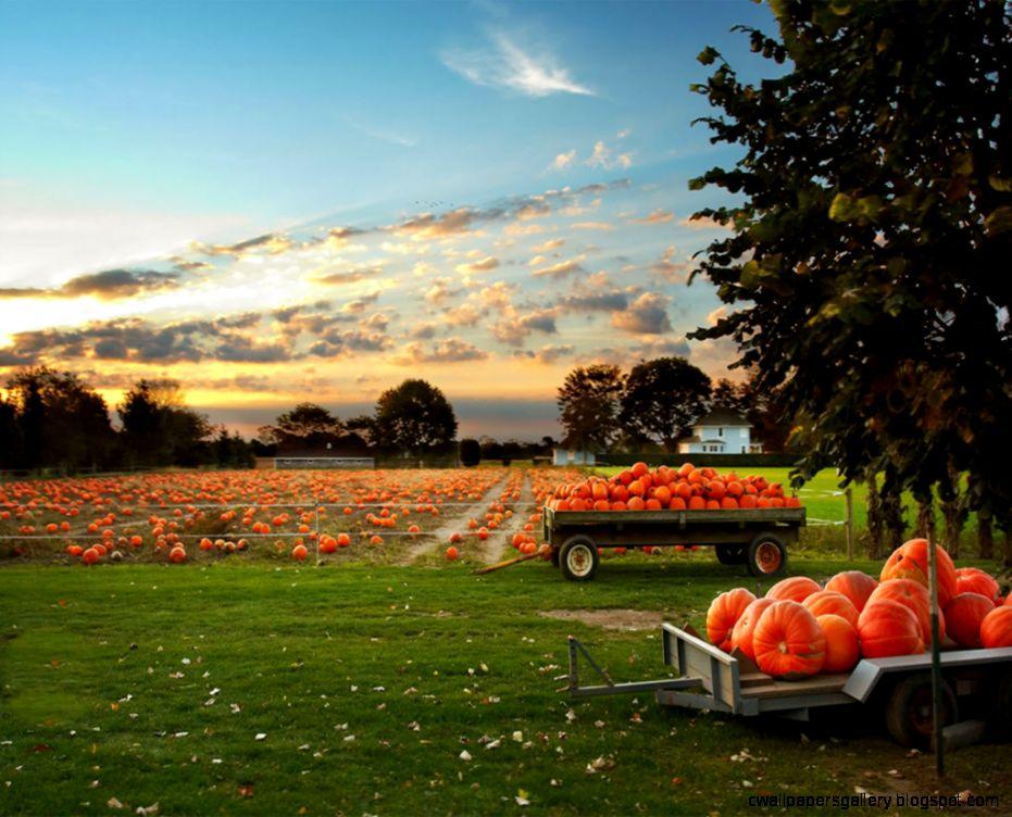 The Great Pumpkin  Zovs Blog