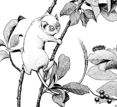 monos extintos de usa Shoshonius