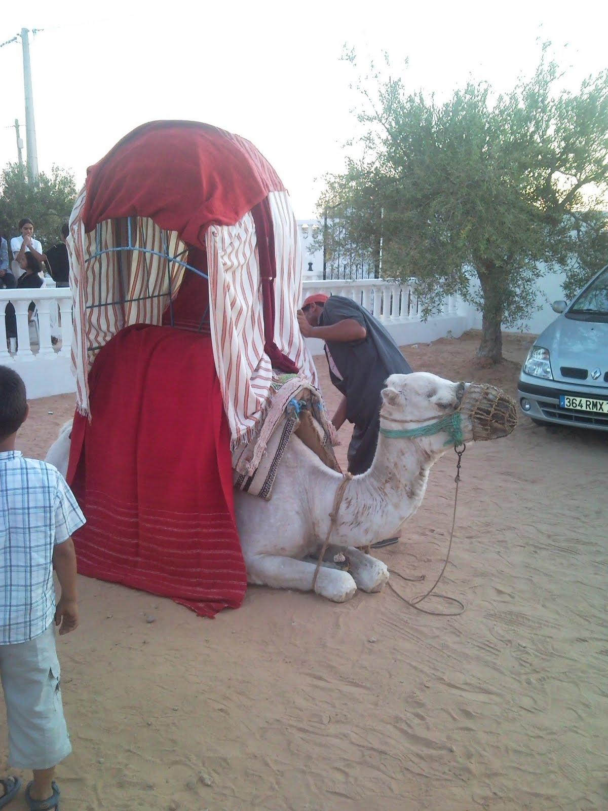 profils du chameau pour le reconnatre au cas o vous veniez le croiser - Location De Chameau Pour Mariage