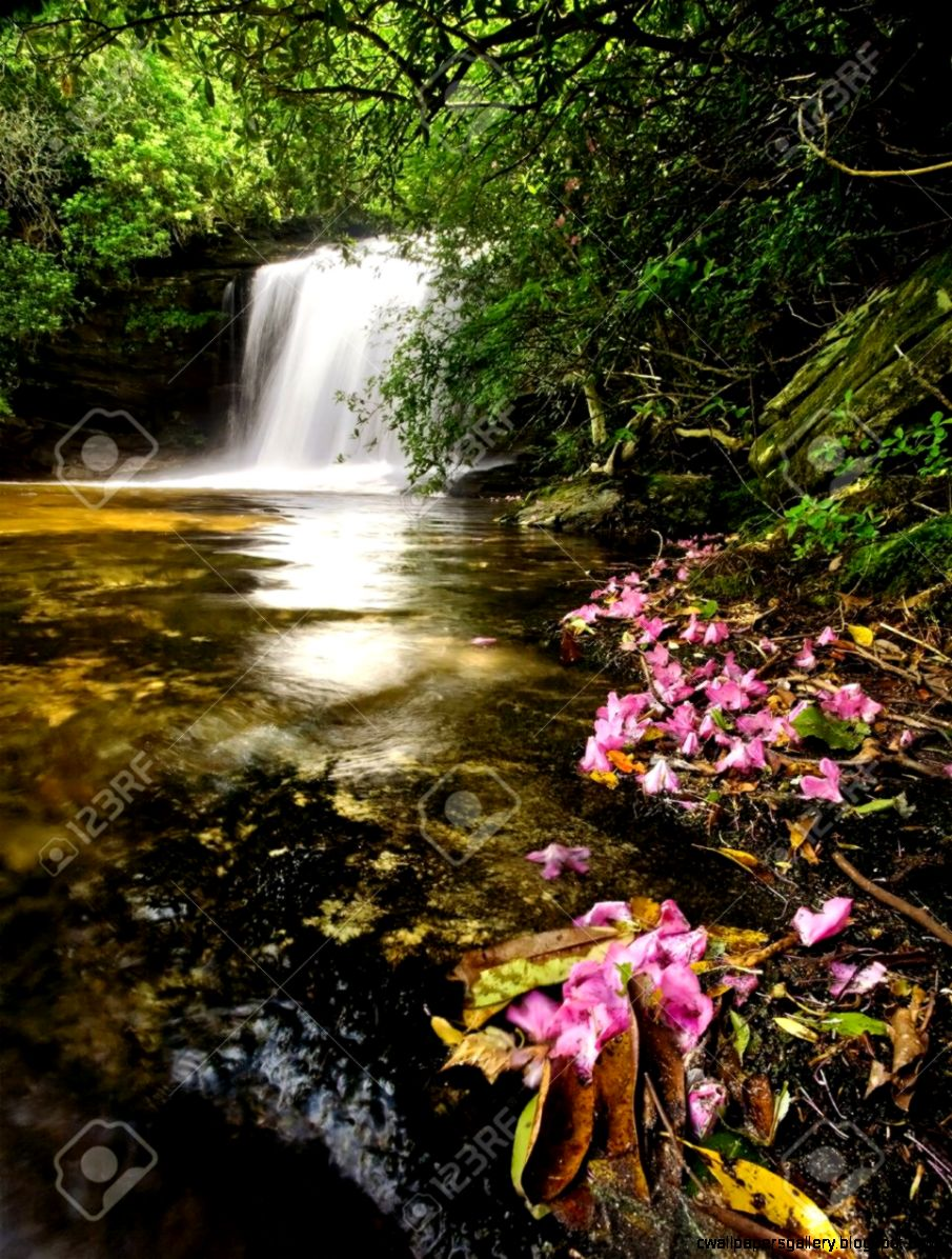 Tropical Rainforest Waterfalls With Flowers Wallpapers Gallery