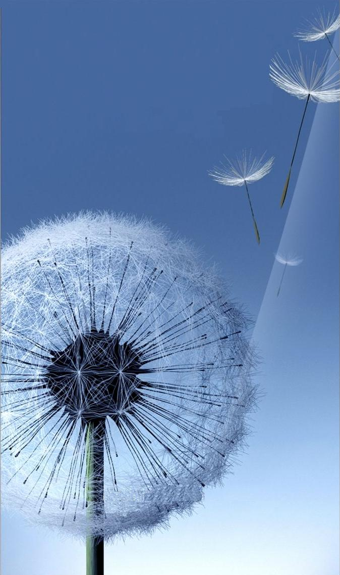 galaxy siii dandelion live wallpaper