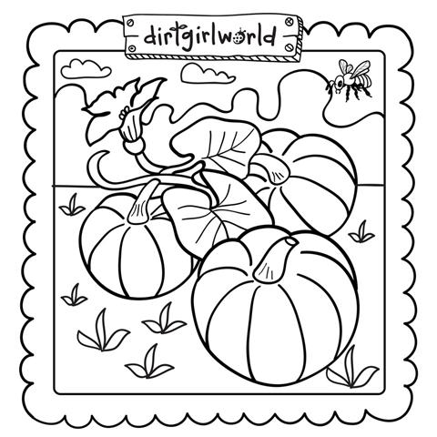 Pumpkin Patch Coloring Page Gtgt Disney Coloring Pages