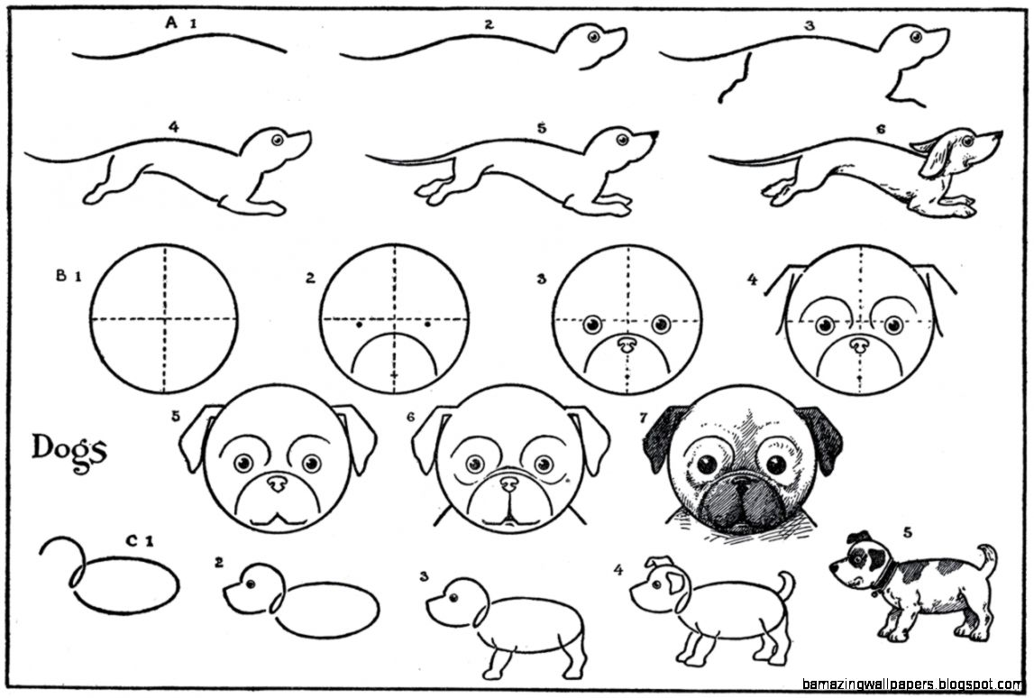 easy cute step by step animal drawings amazing wallpapers