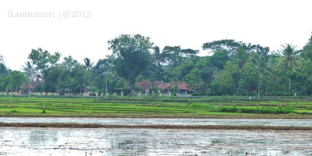 Nangguulan Kulon Progo tanam padi