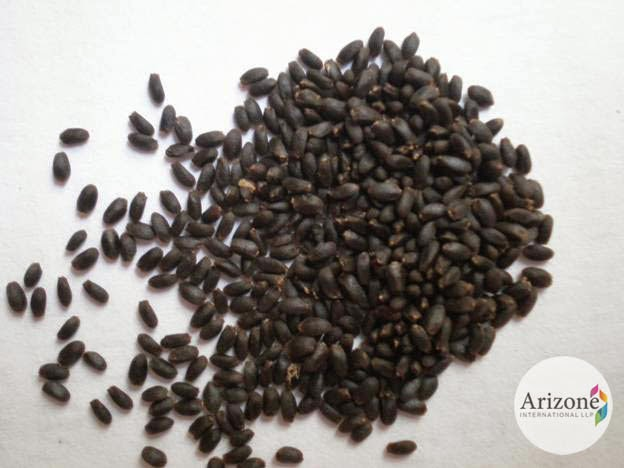 Basil Seeds Arizone International LLP Vapi