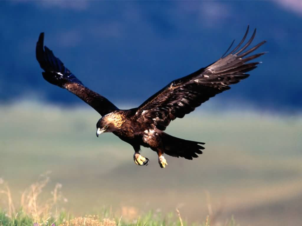 Red Eagle Bird