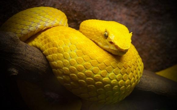 Hình nền rắn đẹp nhất