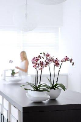 planta junio