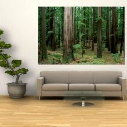 redwood tree wall mural art poster