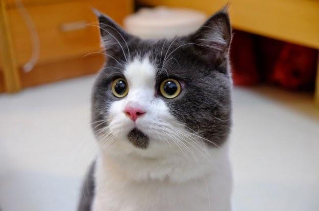 adorable-cat-1
