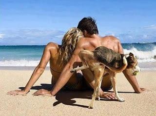 smešna slika: pas piški na ljubavnom paru