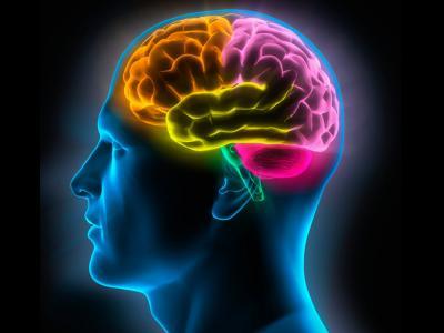 Nuestra mente no solo nos sirve para aprender