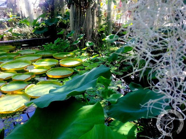 czy warto odwiedzić ogród botaniczny