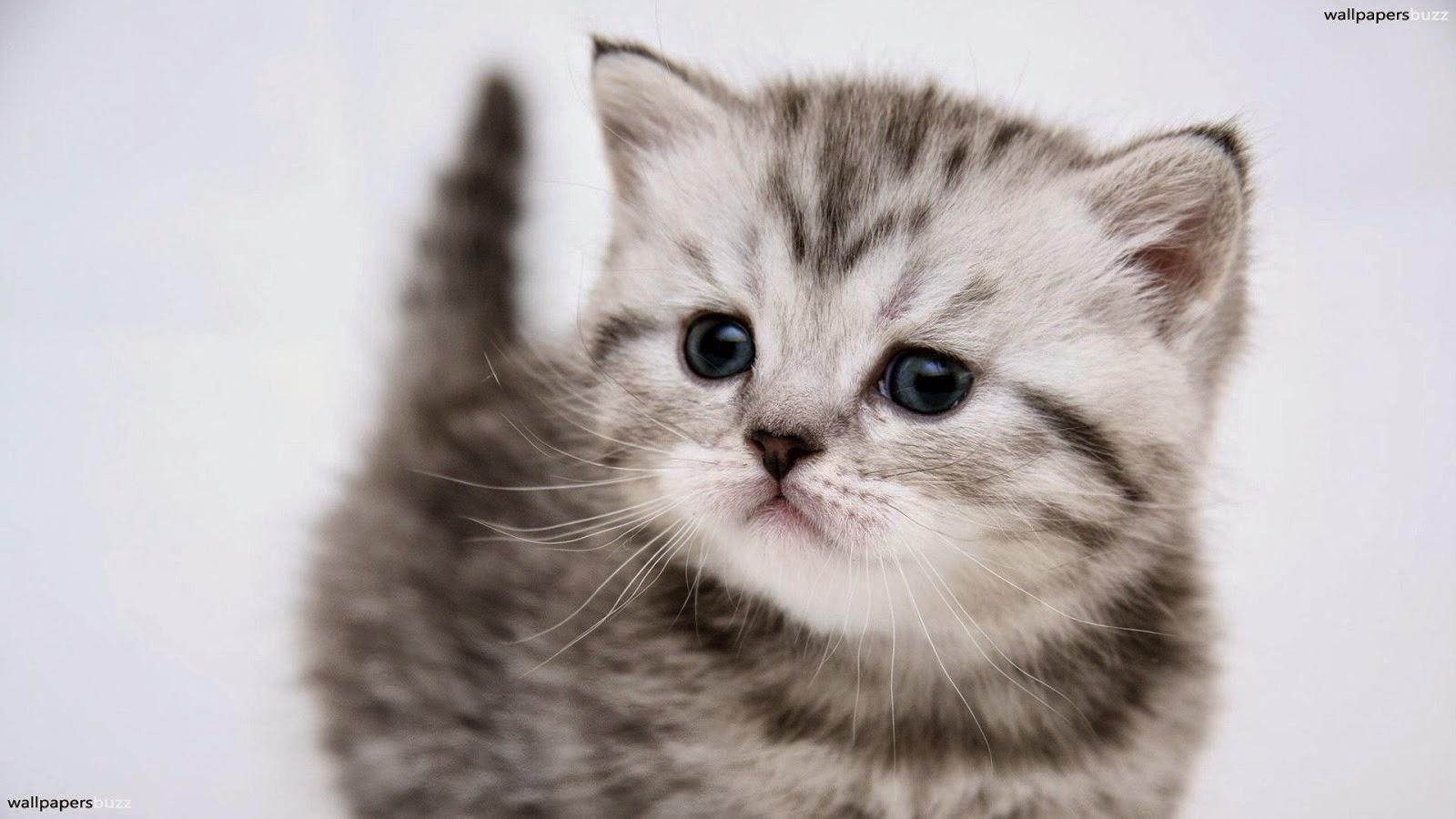 Pin gatitos bebes fondos de pantalla on pinterest for Http y