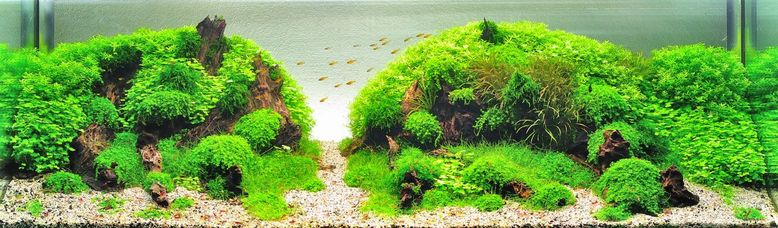 Aquascaping spain julio 2014 - Aquascape espana ...