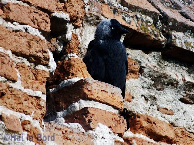 corb ruina gostinari