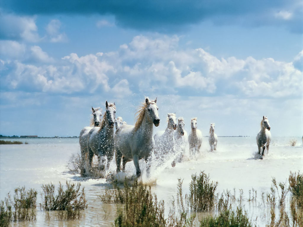 Best   Wallpaper Horse Beach - wild+horses+wallpapers+4  You Should Have_696411.jpg