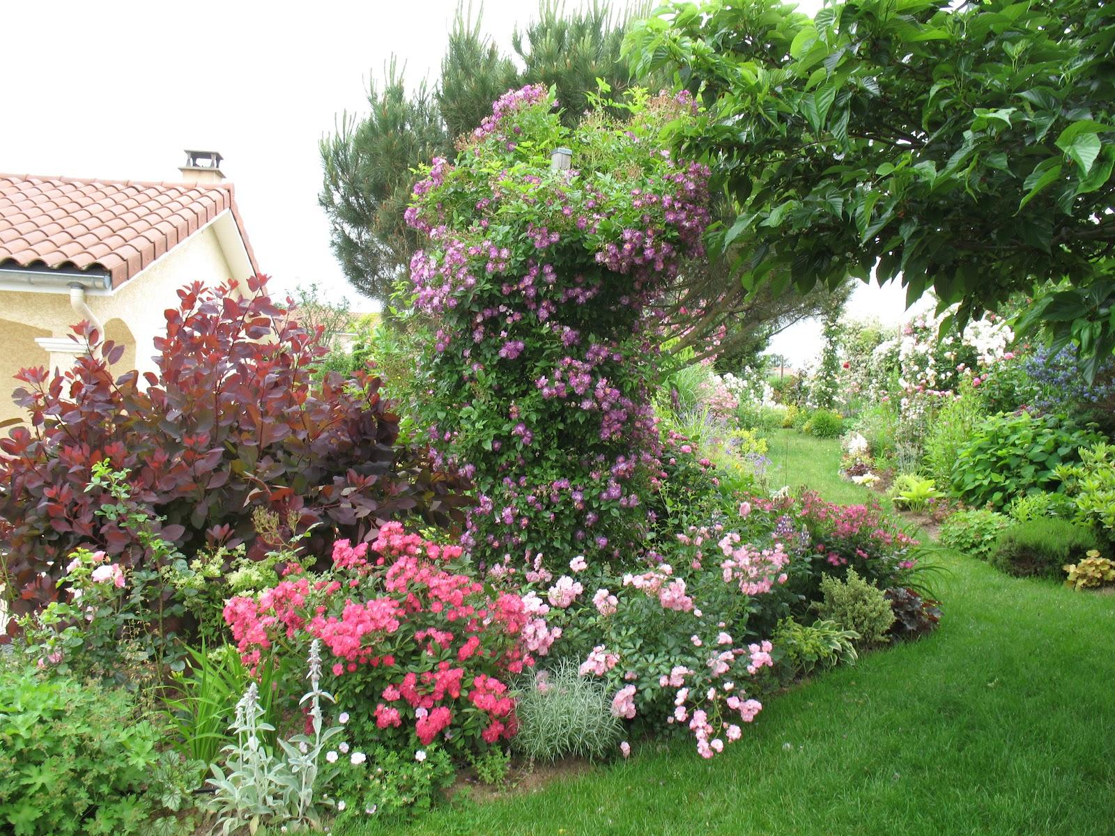roses du jardin ch neland rosier castor. Black Bedroom Furniture Sets. Home Design Ideas