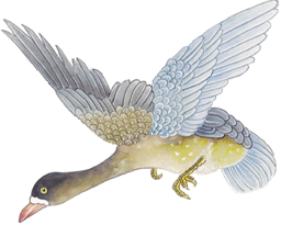 bird drawing image