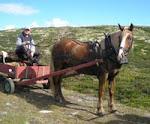 Hesteeieren