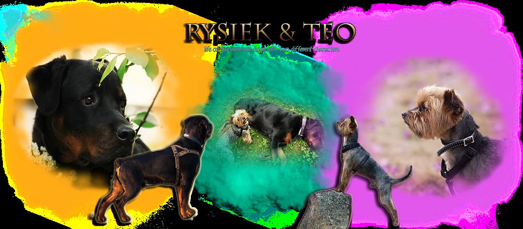 Rysiek & Teo