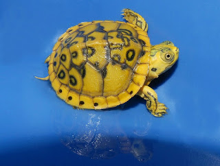 turtle beach,  turtle bay,  turtle bay resort,  turtle diary,  turtle back zoo,  turtle man,  turtle beach x12,  turtle shack,  turtle island,  turtle wax,  turtle aquarium,