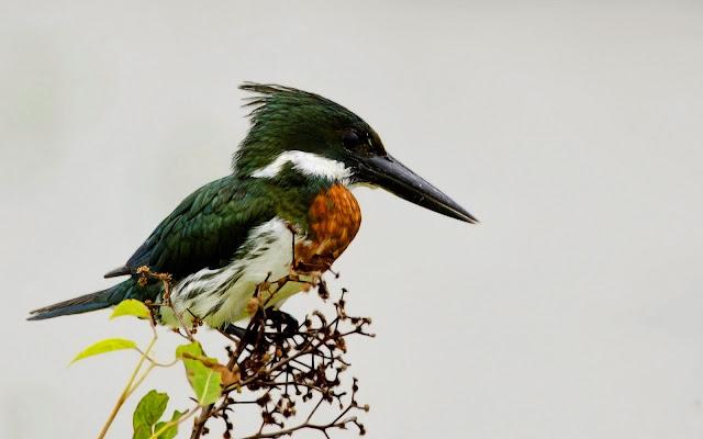 Pajaro en una rama - Aves Exoticas