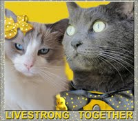 WE WILL LIVESTRONG