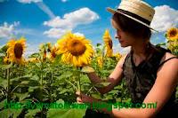 Biji Bunga Matahari  pun bisa jadi biodiesel