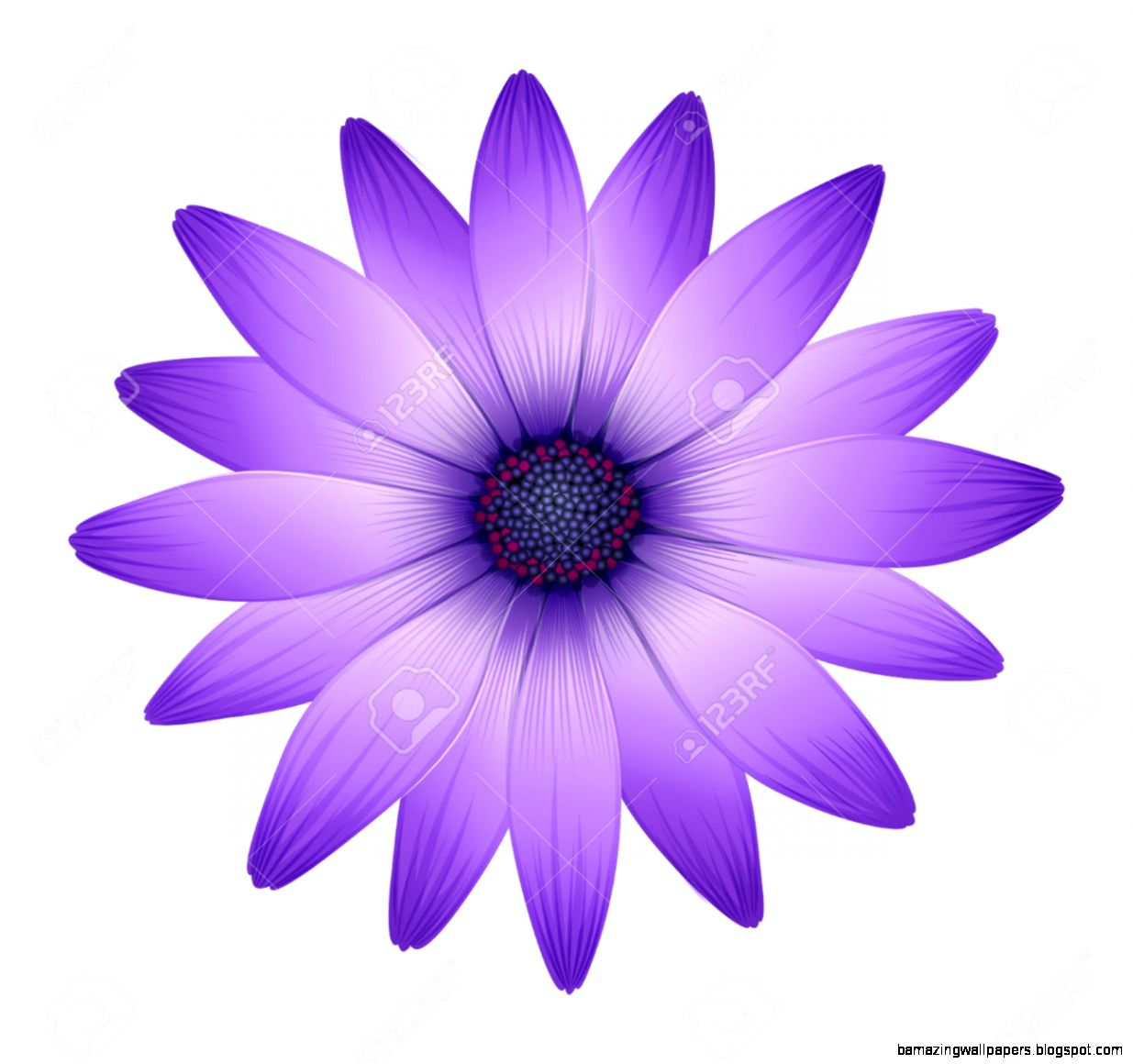 Purple Flowers White Background | Amazing Wallpapers