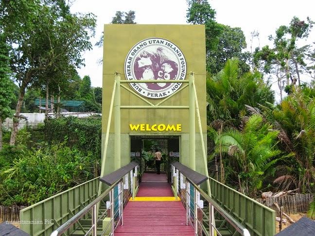 how to get to orangutan island