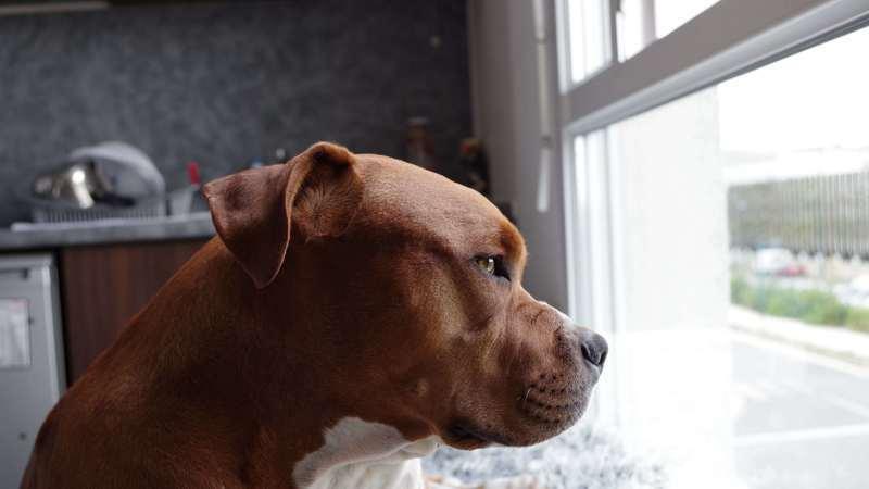 Firma para que los perros PPP de Illescas puedan volver a pasear durante el día