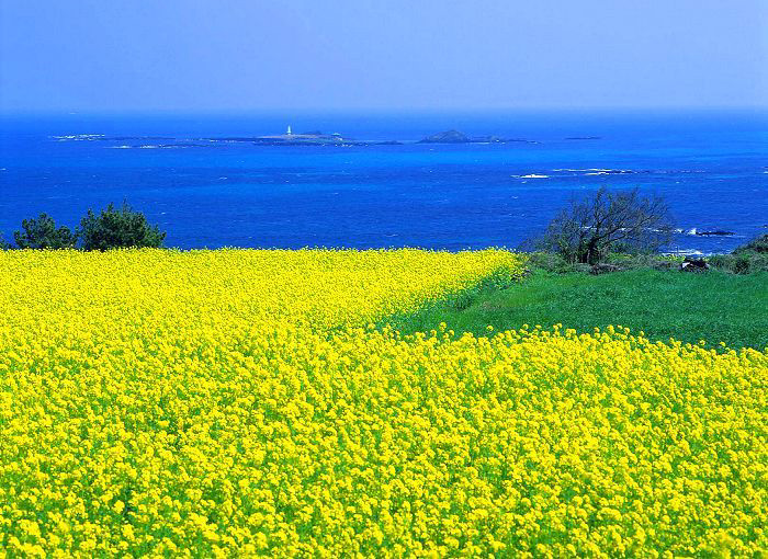 Idyllic scenery at Jeju Island known as the island of the gods