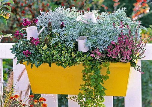 Il piacere di piante e fiori per il balcone for Fiori per balconi soleggiati