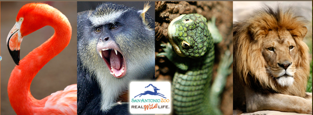 Snake farm zoo coupons best secured loans deals get the latest coupons memberships and promo codes online for arkansas alligator farm and petting zoo couponsnd snake farm in new braunfels with address fandeluxe Image collections