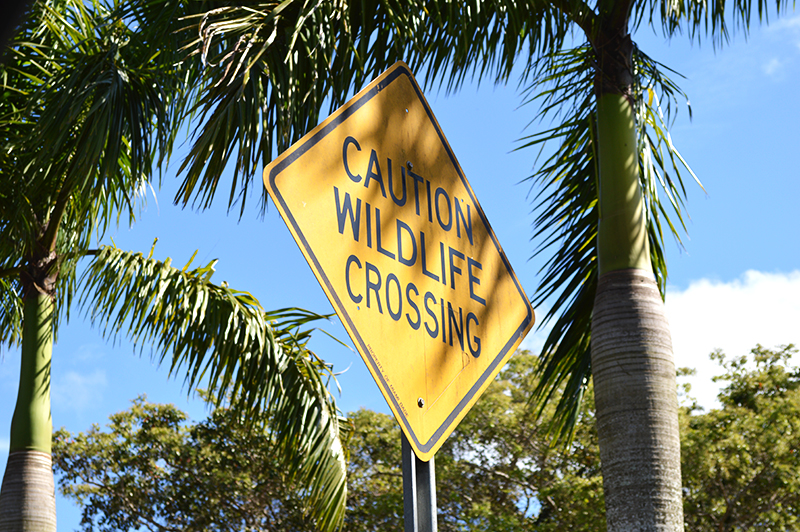 caution wildlife crossing sign taken by fashion blogger Anais Alexandre of Down To Stars