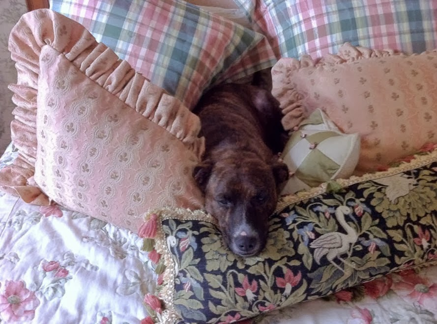Dog Crapped On Bed