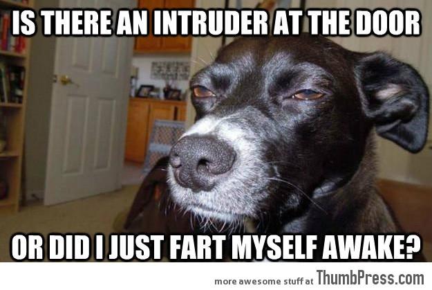Funny Animal Meme Images : Mindless mirth funny animal memes