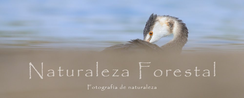 Naturaleza Forestal