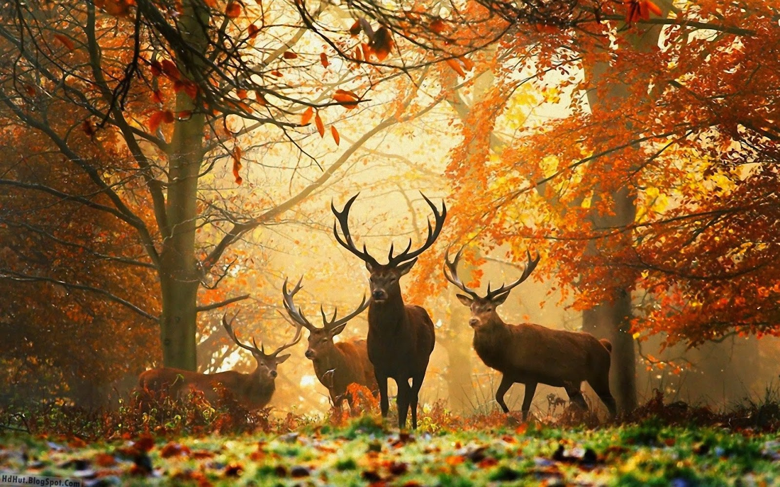 http://hdhut.blogspot.com/2014/02/top-14-beautiful-deer-wallpapers-in-hd.html