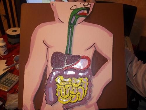 Como Hacer El Sistema Digestivo Con Material Reciclable | hnczcyw.com