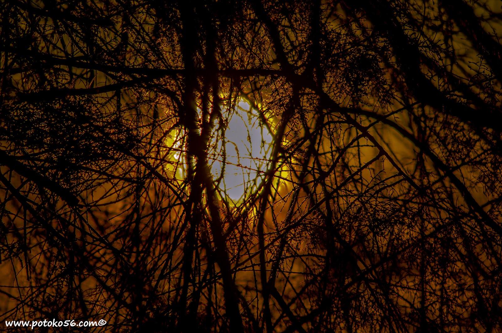 El sol enredado en las ramas de un árbol en Rota